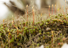 Long Lush Moss In The Forest