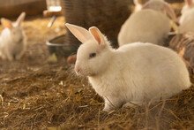 Rabbit, White, Fluff, Burrow, Carrot, Hare, Nature, Farm, Fur Coat, Alice, Peter, Alice In Wonderland, Magician, Game, Forest, Easter, Bunny
