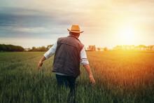 Senior Man Walking Through Wheat Filed