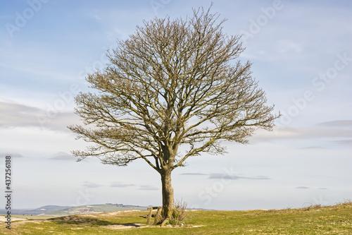 Valokuva Bare tree on hilltop