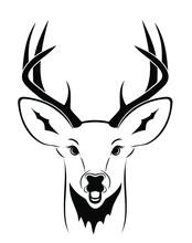 White Tail Deer Head Vector