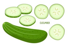 Cucumber. Whole Cucumber And Chopped Pieces. Fresh Farm Vegetables For Diet. Ingredients For Cooking. Flat Design Style For Menu, Cafe, Restaurant, Poster, Banner, Emblem, Sticker, Recipe Design .