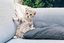 Brown Tabby Kitten Photo
