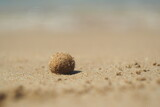 Fototapeta Fototapety z morzem do Twojej sypialni - Mała beżowa kulka na piaszczystej plaże na Krecie, Grecja