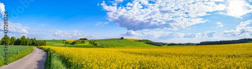 Tela Oilseed rape field with trees against blue sky
