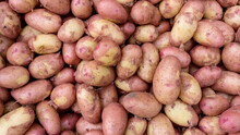 Young Ripe Potatoes With A Thin Skin