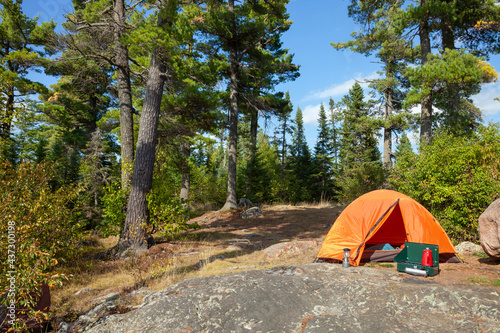 Campsite with orange tent below big pines and blue sky on sunny afternoon in northern Minnesota #437300198