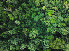Green Forest In The Tropics From Above