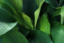 Leaves Green Dark Leaf Detail In The Natural