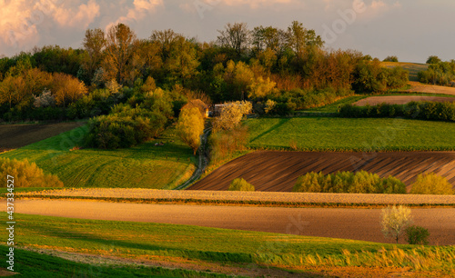 spring panorama of fields on farmland cultivated extensively and ecologically #437334527