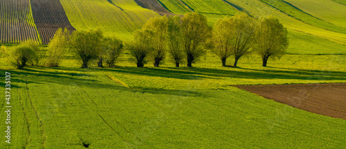 Spring panorama of fields on farmland cultivated extensively and ecologically,Ponidzie,Poland #437335137