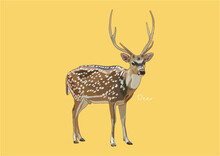 Vector Illustration Of Deer, True Deer, Red Deer, Fallow Deer