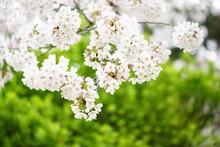 South Korea, Busan, Centum Onympic Park, Cherry, Camellia, Blossoms, 한국, 부산, 센텀 올림픽 파크, 동백, 벚꽃. 봄꽃