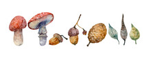 Watercolor Hand Drawn Autumn Set With Inedible Mushrooms Isolated On White Background. Forest Illustration With Fly Agarics, Acorns, Leaves, Cone.