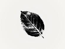 Black And White Leaves Are Decomposing Imperfections Isolated White Background