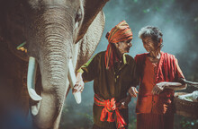 Old Couple Walking With Their Elephant Into The Jungle, In Thailand