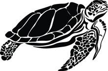 Turtle Full Body Vector