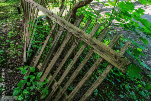 old collapsed wooden fence fence and green thickets of trees Fototapeta