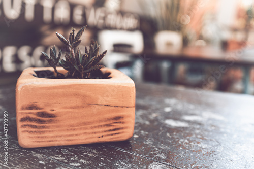 Foto Close up shot of a little succulent plant used as decoration in an outdoor table of a bar and bistro restaurant in a touristic alley in Sant'Arcangelo di Romagna, italy