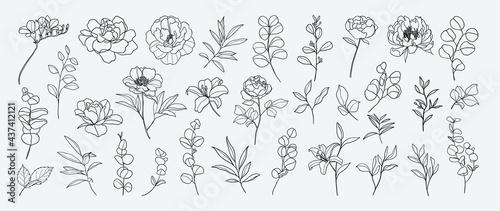 Photographie Minimal botanical hand drawing design for logo and wedding invitation