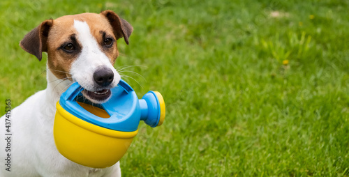 Canvastavla Dog Jack Russell Terrier stands on the lawn and holds a watering can