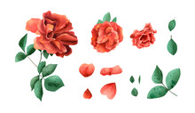 Watercolor Red Roses Set. Botanical Illustration With Bright Warm Rose Flowers, Petals, Leaves, Bud