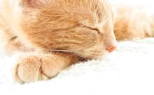 Ginger Fluffy Cat Stock Photo