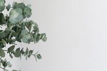Still Life Arrangement Flowers With Green Plant