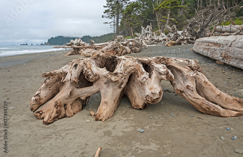 Weathered Logs on an Ocean Coast #437464339