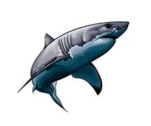 Great White Shark From A Splash Of Watercolor, Colored Drawing, Realistic. Vector Illustration Of Paints