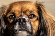 Close Up Of A Dog