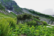 Lush Green Grass, Ferns, White Wildflowers Grow In The Alpine Meadows Of The Caucasus. A Patch Of Snow Is Visible On The Rocky Slope Of The Mountain. Russia. Krasnaya Polyana