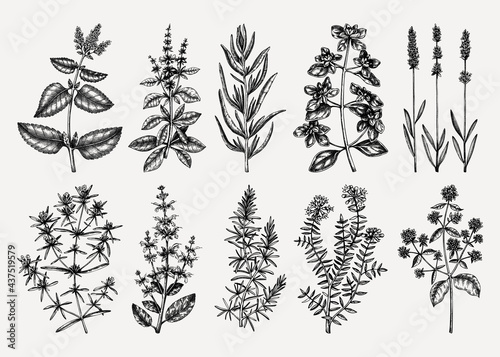 Fototapeta Traditional Provence herbs collection - savory, marjoram, rosemary, thyme, oregano, lavender