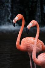 Flamingos, Jurong Bird Park, Singapore