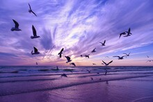 Flock Of Birds By The Sea