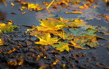 Herbstblätter In Einer Pfütze Auf Einer Straße