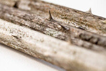 Macro: 3 Prickle Canes With Thorns