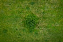 A Lonely Green Tree Captured From Above - A Treetop Shot As A Peaceful Background, Concept Nature.