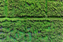 壁の日陰の部分を覆う濃い緑色の苔、背景素材