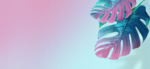 Tropical Leaves In Bright Creative Pink And Blue Colors. Minimalistic Background Concept Art.
