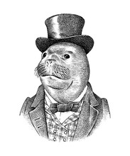 Seal Man In Hat And Suit. Marine Mammal. Victorian Gentleman Or Aristocrat. Fashion Animal Character. Hand Drawn Sketch. Engraved Illustration For And T-shirts Or Tattoo