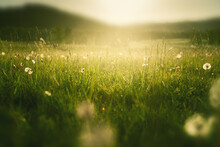 Wild Grasses With Dandelions In The Mountains At Sunset. Macro Image, Shallow Depth Of Field. Summer Nature Background.