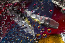 Translucent Water Droplets Are Located Against The  Red-blue Background With A Yellow-black-white Bird Feather. Abstract Fantasy. 3D Render.