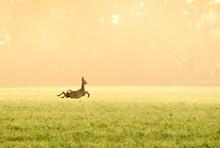 Silhouette Of A Deer In The Field