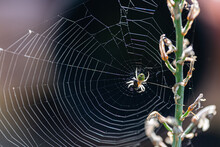 Spider Trapping Its Prey In A Web