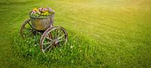 Garden Decoration - Old Wheeled Metal Flower Pot In Green Grass. Banner Copy Space