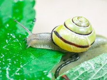 Colored Snails In Spring