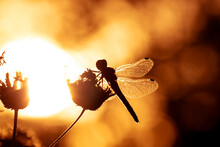 Dark Silhouette Of A Dragonfly On A Yellow Bright Blurred Background