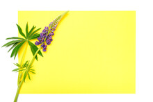 Blank Yellow Paper Card Note Mockup For Text With Decor Made Of Flower Lupine In Blue Lilac Color In Full Bloom On A White Backgroun