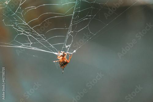 Slika na platnu Insecte au Costa Ria